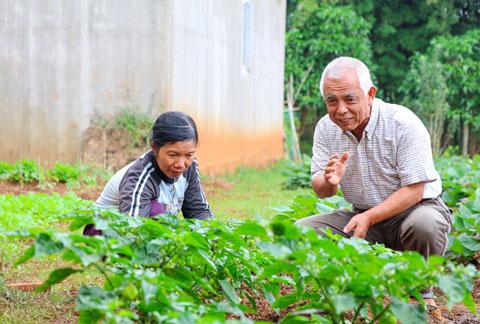Ông Katayama Motoosa, Công ty Liên kết nông dân hướng dẫn công nhân cách  chăm sóc cây ớt Nhật theo phương pháp hữu cơ.    Ảnh: H. Gia